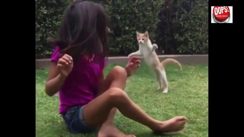 УПС Новые видео приколы про №8 ,август 2018 пусть говорят, приколы животные последний выпуск