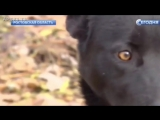 Собака на сломанных лапах прошла 300 километров, чтобы вернутся к хозяйке