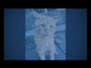 Пара забрала из приюта самого печального кота, чтобы сделать его счастливым