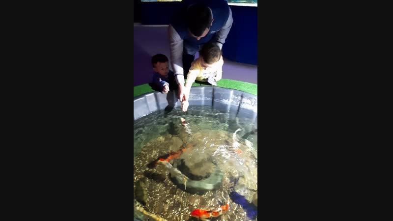 подводный мир ТРЦ Ривьера