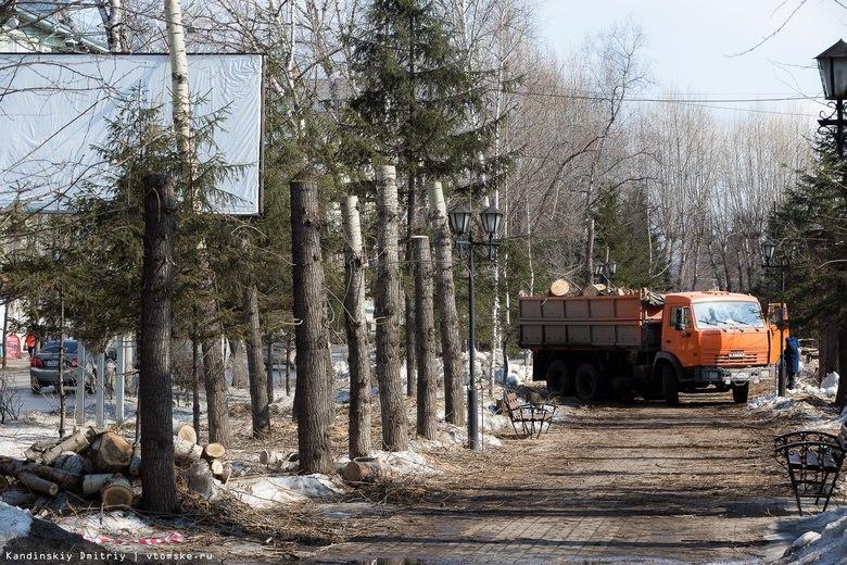 Эколог: вырубка 350 деревьев на Кирова в Томске — это варварство