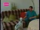 Staroetv Друзья моего хозяина Домашний, 2006 Сюжет об иглоукалывании для домашних животных