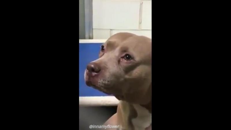 Хозяева отдали эту собаку в приют