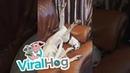 Dog Sleeps in Silly Pose    ViralHog
