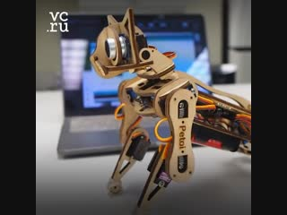 Кот-робот с открытым исходным кодом Nybble за $200