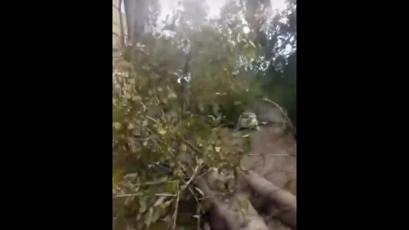 На Кутузова 16 упал тополь 3 машины всмятку
