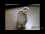 Котночек_тоже_Любит_Нати_HD.mp4