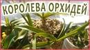 ДОЛГОЖДАННАЯ ПОСЫЛКА С ВАНДАМИ орхидеи. Пересадка и уход.