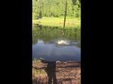 Шашлыки , природа, тарзанка)