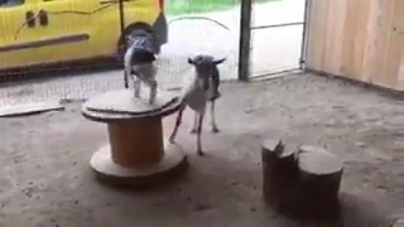 Заботливая мамаша покатала детеныша на каруселе