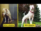 Dogs Before &amp After Their Adoption That Will Melt Your Heart
