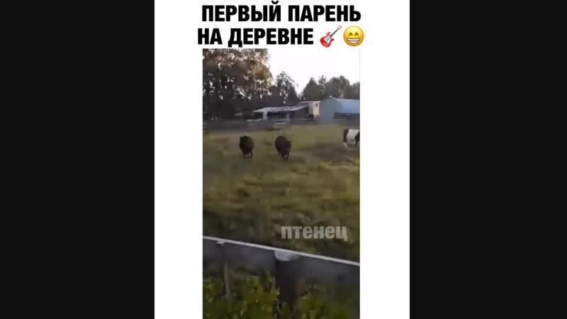 Музыкальные коровки