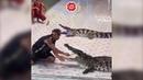Крокодил чуть не оторвал дрессировщику руку во время шоу - Видео - L!fe