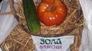 Раскрываем секреты плодородия варим сенную палочку и готовим сад к зиме и большому урожаю
