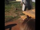 Шустрый пёс испортил праздник и сожрал выпущенную на свободу бабочку