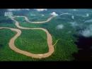 В дебрях Латинской Америки.1 серия. Амазонка - Один лес, много миров