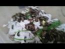 Кормление мраморных тараканов