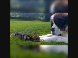 Кот и собака, да ещё в таких разных весовых категориях, а дружат -)