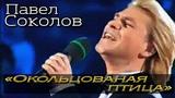 Павел Соколов - Окольцованная птица