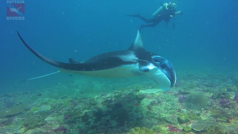 Морской дьявол на Manta Point острова Нуса-Пенида | Дайвинг на Бали