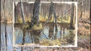 Painting a Swamp in Gouache and Colored Pencils