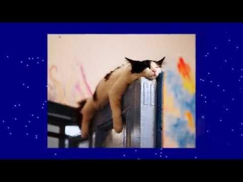 23 изобретательных кота, которые спят изо всех сил
