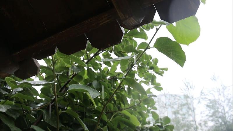 ENG CC 비 오는 날 김치전 만들어 먹기 · 빗소리 전 부치는 소리 ASMR Kimchi Jeon · Korean Panca