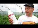 Выращивание огурца внесение кальция и бора, каким удобрением!