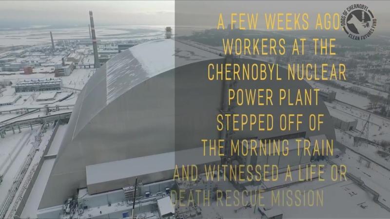 Трое рабочих спасли собаку с крыши саркофага в Чернобыле
