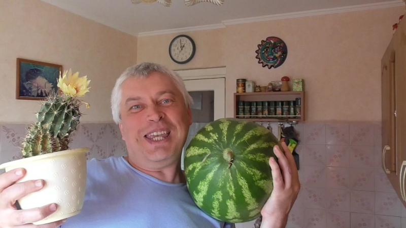 Я на кухне снимаю видео про арбуз и про кактус