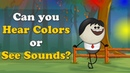 Can you Hear Colors or See Sounds aumsum kids education