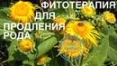 43. О.Д. Барнаулов. Фитотерапия для продления рода