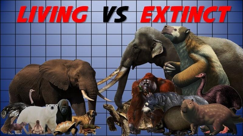 Animal Size Comparison Extinct vs Living