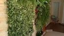 Saiba como fazer um jardim vertical na parede da sua casa