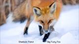 Big Furry Fox (Ylvis vs. Amon Tobin)