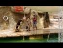 Шоу морского котика Тунис 2018