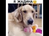 Не трогай мою игрушку?