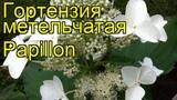Гортензия метельчатая Папилон. Краткий обзор, описание характеристик hydrangea paniculata Papillon