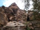 Забайкальская горная малина