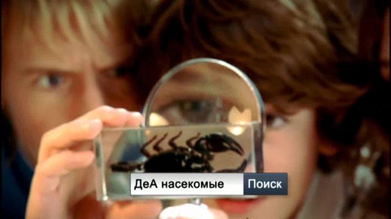 Настоящие насекомые Ко от ДеАгостини