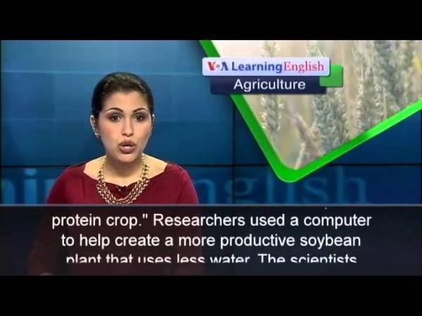 Researchers Develop a Better Soybean Using a Computer