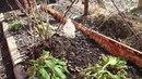 Почва оттаяла Начинаем посадки