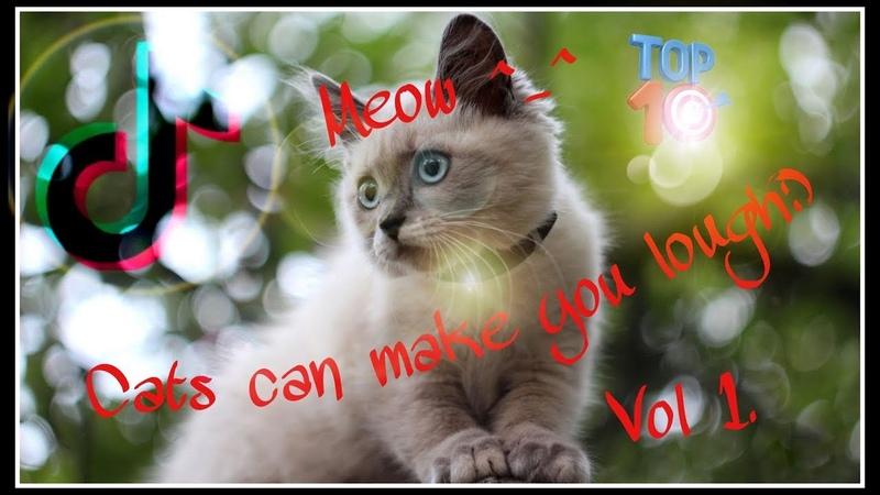 12 Top 10 cats on Tik Tok Like Kwai