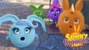 Sunny Bunnies | SORPRESA DE CONEJITOS | Compilación | Dibujos animados para niños | WildBrain