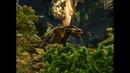 ARK Extinction Creature Teaser Gacha