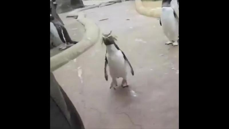 Пингвин сегодня будет туса, сегодня я напьюся, седня, Olymp Trade, Олимп Трейд, Forex, форкс, биномо