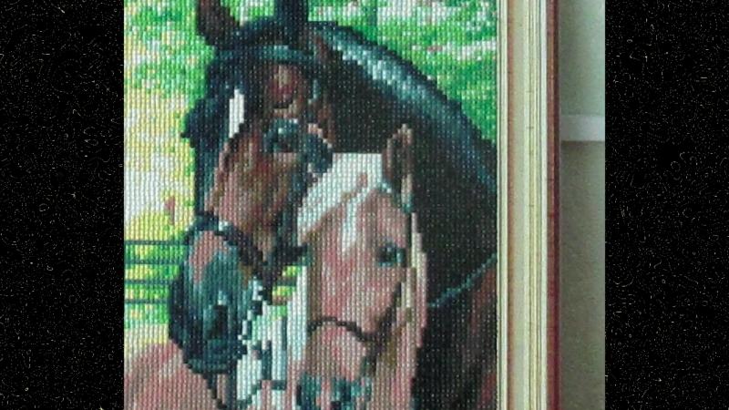 Алмазная мозаика Чёрная лошадь и маленький жеребёнок