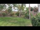 California.Видео из архива-Наш front-yard-Апрель 2015.