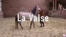Tour de cirque 1 Apprendre la Valse à son cheval