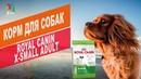 КОРМ ДЛЯ СОБАК ROYAL CANIN X-SMALL ADULT | Обзор КОРМА ДЛЯ СОБАК ROYAL CANIN X-SMALL ADULT